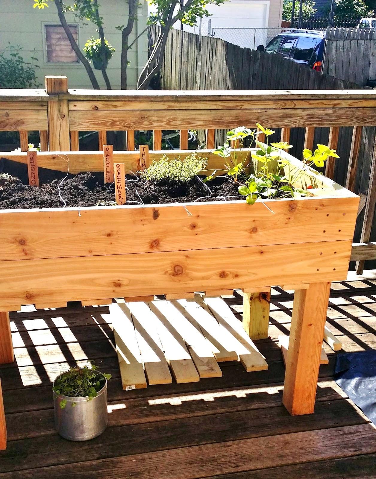 Apartment 528: The Weekender: Urban Gardening Part 1 - DIY ...