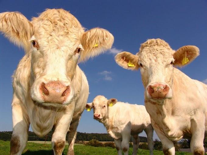 KSH: tavaly novemberben 4,4 százalékkal nőttek a mezőgazdasági termelői árak