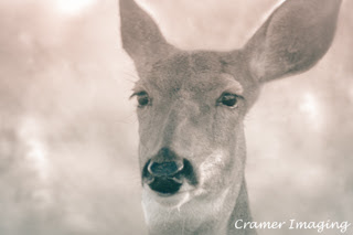 Cramer Imaging's professional quality nature photograph of a female deer or doe head with blurred background in sepia in Rigby, Idaho