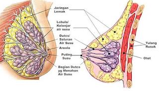 Gambar Obat China Untuk Kanker Payudara