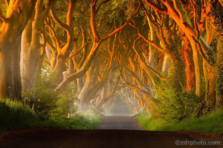 24. The Dark Hedges, Northern Ireland - 29 Wonderful Paths