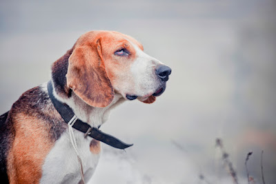 Hunters will make sure their dog is wearing a collar with contact info, maybe even a tracker.