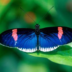 Gambar KupuKupu  Butterfly Wallpapers