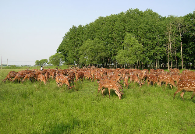 mô hình chăn nuôi tự nhiên