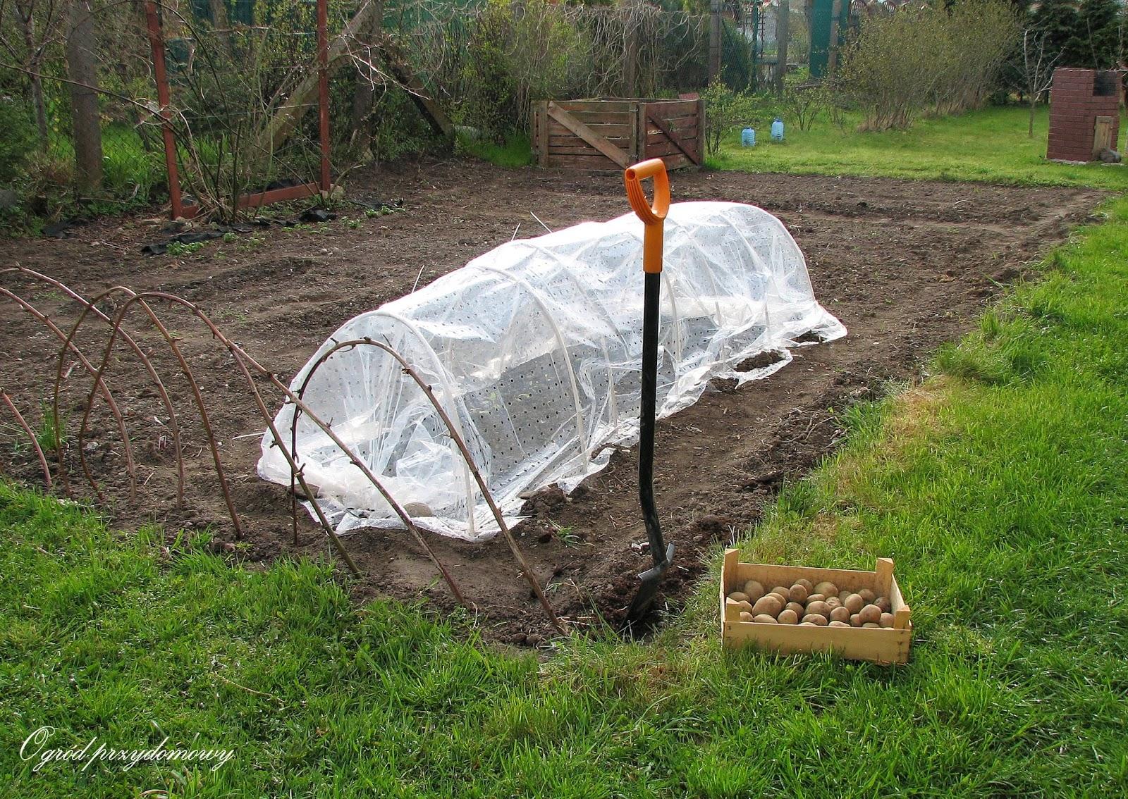uprawa warzywnika, ogród przydomowy