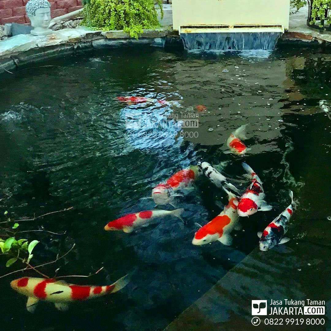 jasa pembuatan kolam hias- ikan koi
