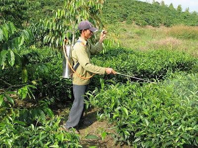 aplicação de agrotóxicos sem proteção adequada: este homem está arriscando sua vida