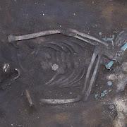 В Омской области нашли могилу древнего воина