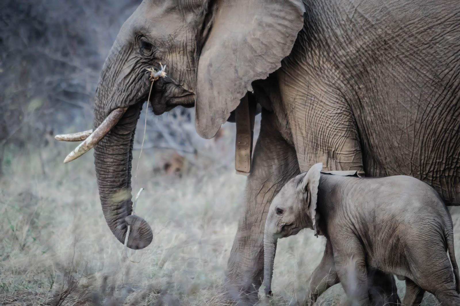 Ile jest słoni w Twojej organizacji?
