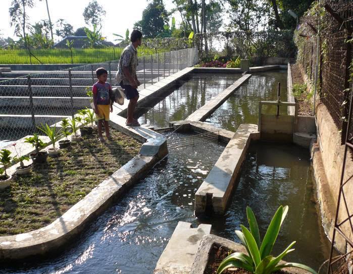 Cara Mudah Budidaya Ikan Patin Pada Kolam