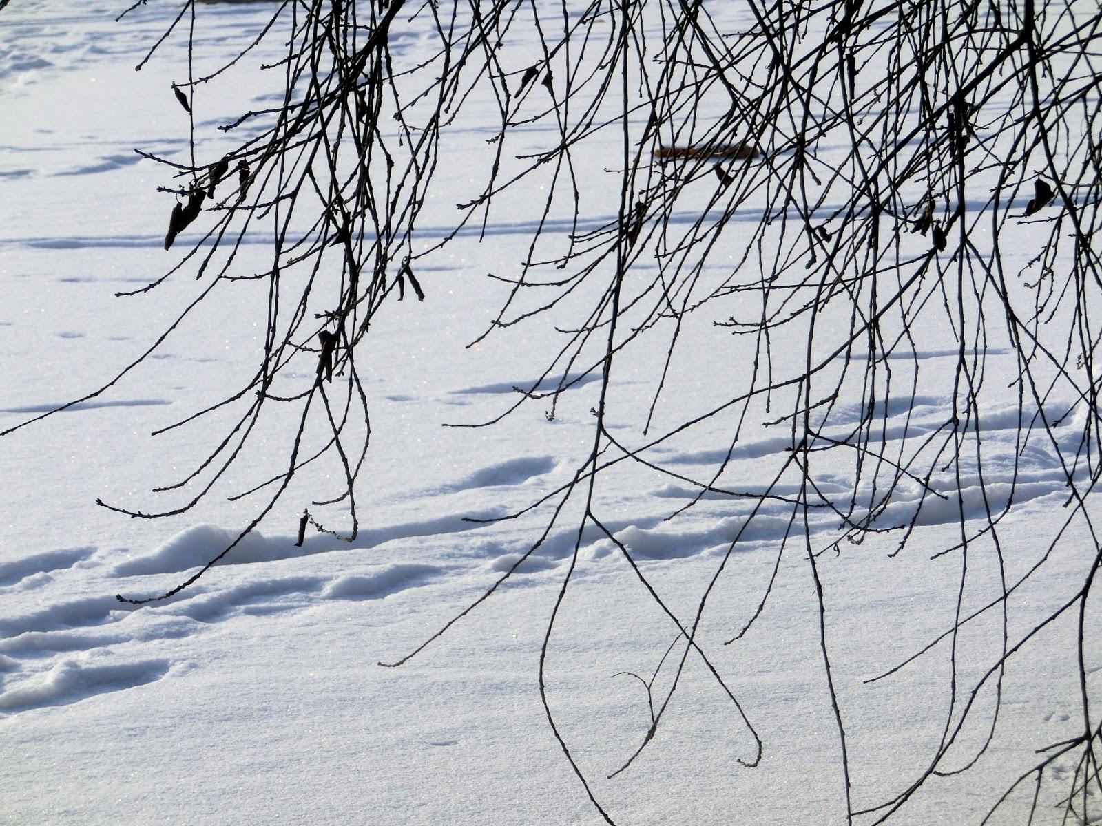 Www Wiersze Wycieczki Wspomnienia Wiersz O Zimie Czekamy
