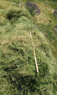 A big pile of grass to be dried