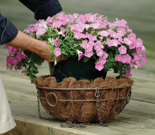 Homeowner Prepares Flowers For Garden