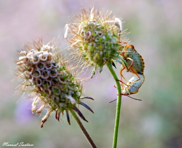 Serramonacesca, flora e fauna