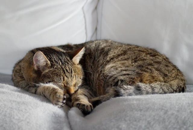 Wenn geliebte Katzen alt werden: Unser alter Kater und das Recht der Tiere auf's Altsein. Auf Küstenkidsunterwegs erzähle ich Euch, warum wir befürchteten, unseren lieben Kater Henry einschläfern lassen zu müssen - und ihn dann doch wieder vom Tierarzt mit nach Hause nehmen konnten.