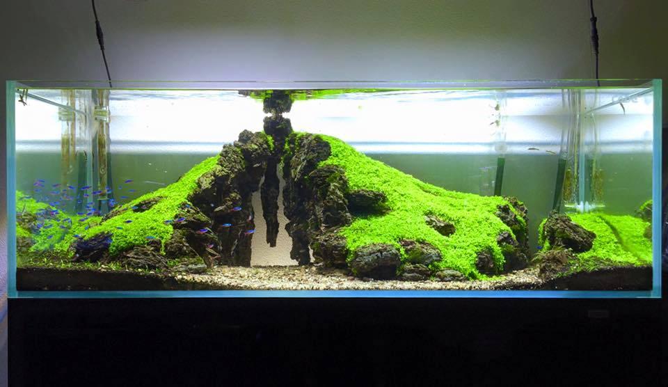 Gambar rumah kayu tercantik gambar con - Gambar aquascape ...