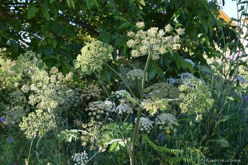 flores silvestres en umbela