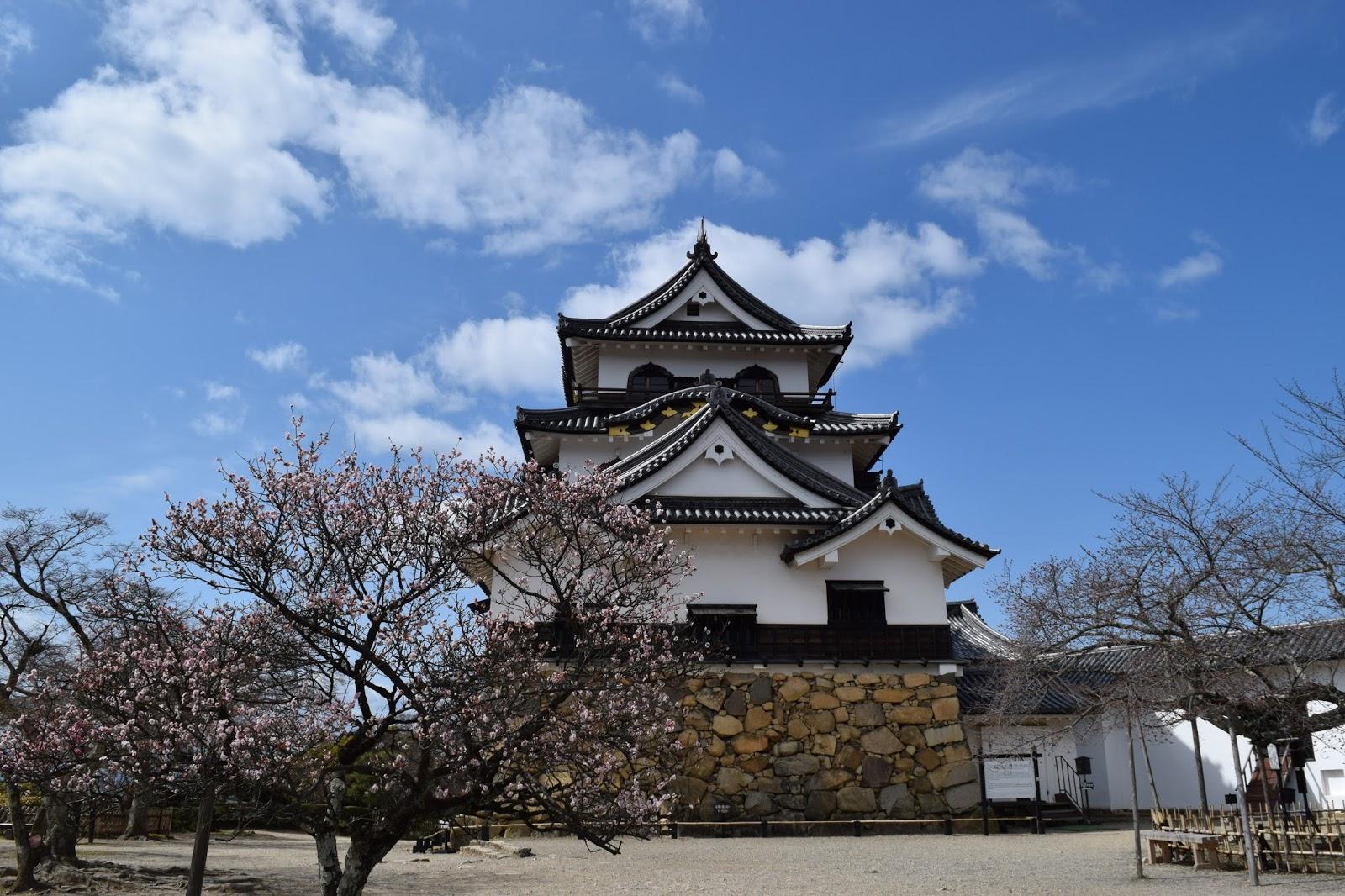 Hikone castle, blossom