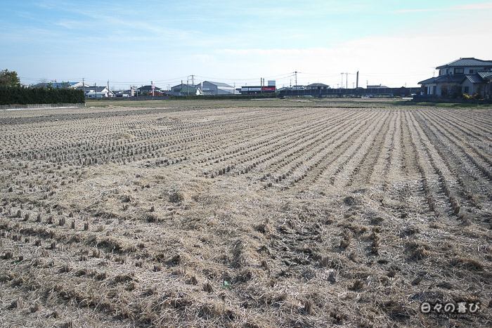 champ moissonné sur le chemin du parc Yoshinogari, Saga