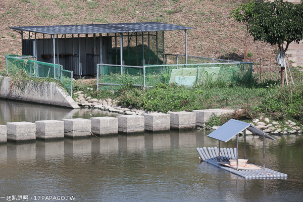 台中北屯|南興公園|萬坪公園|落羽松大道|米老鼠樹|生態滯洪池|滑溜冰場|籃球場