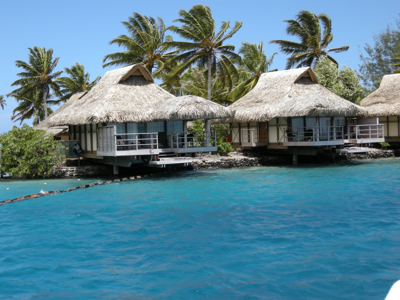 Tahiti Bathing Suits