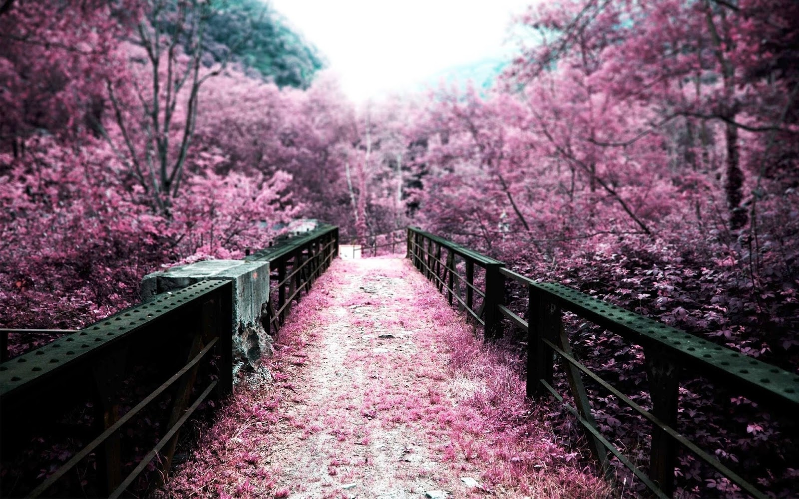 Cherry Blossom Nature Landscape Wallpaper