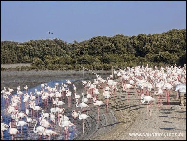 Ras Al Khor Wildlife Sanctuary, Dubai
