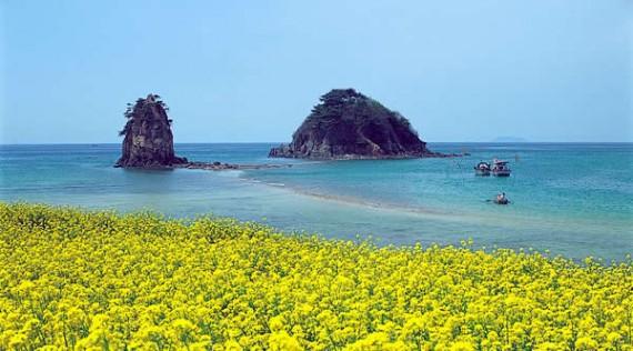 Beautiful yellow landscape