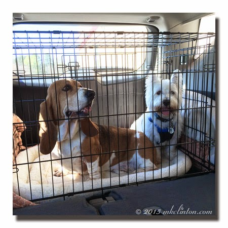 Basset and Westie in car kennel