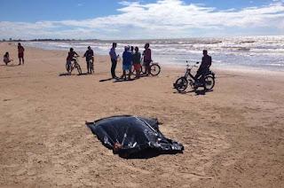 http://vnoticia.com.br/noticia/1241-corpo-de-homem-encontrado-a-beira-mar-na-praia-de-grussai
