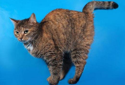 99 Arti Mimpi Dikencingi Kucing Menurut Primbon Paling Lengkap
