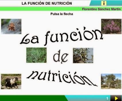http://cplosangeles.juntaextremadura.net/web/edilim/curso_3/cmedio/los_seres_vivos_3/la_nutricion/la_nutricion.html