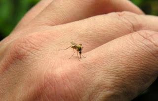 Divulgado novo boletim da dengue, zika e chikungunya; Picuí está em risco de surto