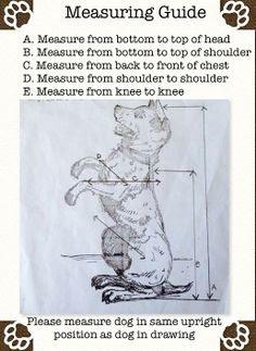 medidas dos cães com megaesôfago