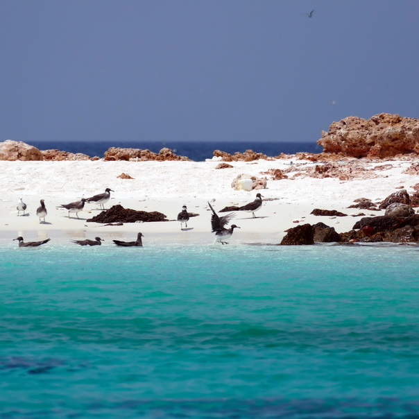 snorkeling, schnorcheln, daymaniyat, islands, inseln, fische, korallen, oman, Muscat, unterwasser, meer, strand, möven, Vögel, brüten, birds, beach