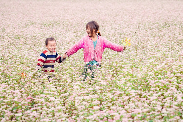 Blend of Buckwheat Flowers During a Trip To Explore Ha Giang Rocky Plateau 5