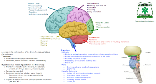 Brain Function Breakdown