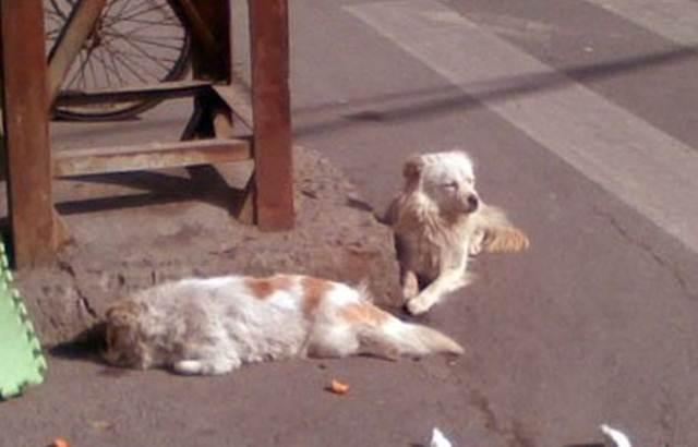 anjing menungu disisi jalan