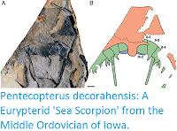 https://sciencythoughts.blogspot.com/2015/11/pentecopterus-decorahensis-eurypterid.html