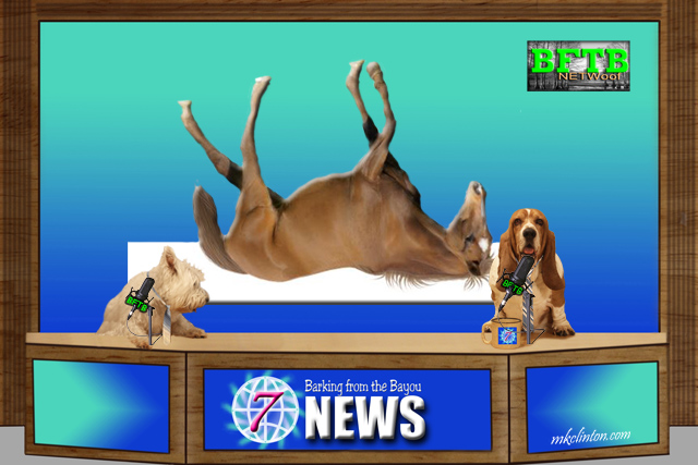 BFTB NETWoof News on a horse playing dead