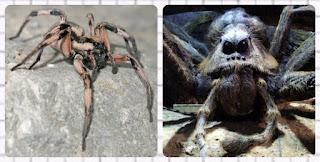 Spider named based on harry potter movie
