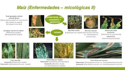 enfermedades de las plantas