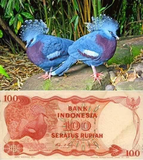 uang kertas indonesia 100 rupiah