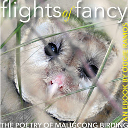 Flights of Fancy Maligcong Birding eBook