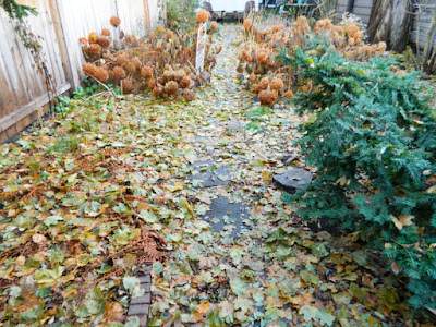Cabbagetown Toronto Fall Backyard Garden Cleanup by Paul Jung Gardening Services before