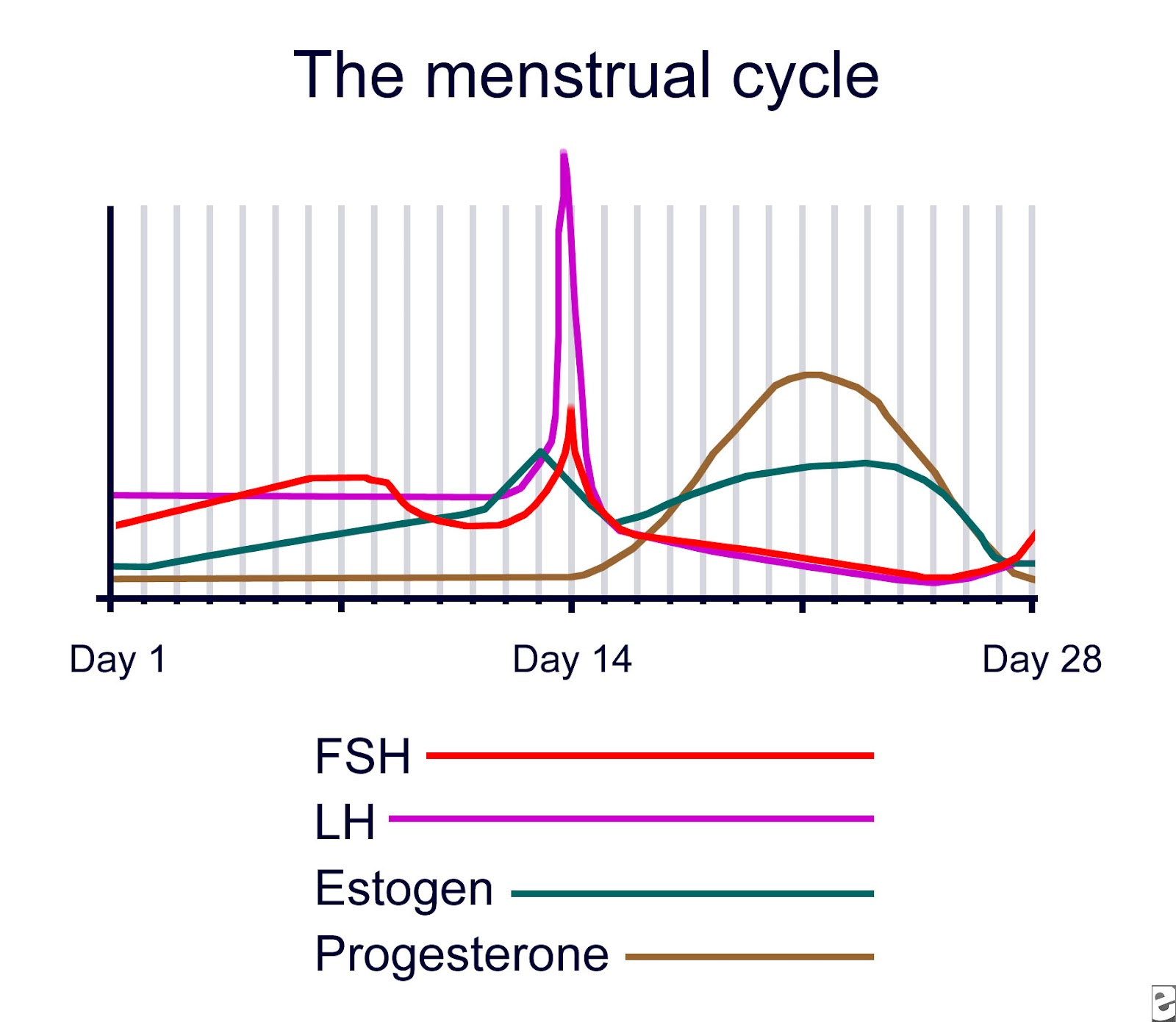 Hormonal Acne Diagram Wiring Of Car Stereo Testosterone Blood Menstral Cycle Bing Images