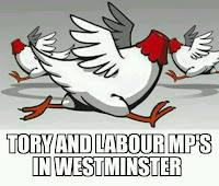 Headless chickens, also know as Tory and Labour MPs at Westminster after the Brexit vote of 2016