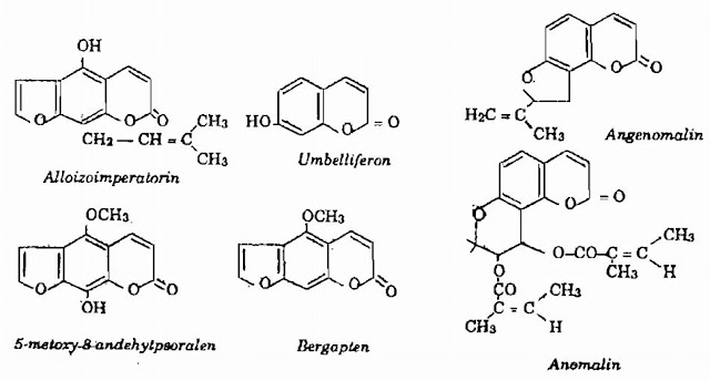 Thành phần hóa học Bạch Chỉ - Angelica anomala - Nguyên liệu làm thuốc Chữa Cảm Sốt