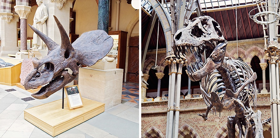 Dinosaur bones at Oxford Museum of Natural History