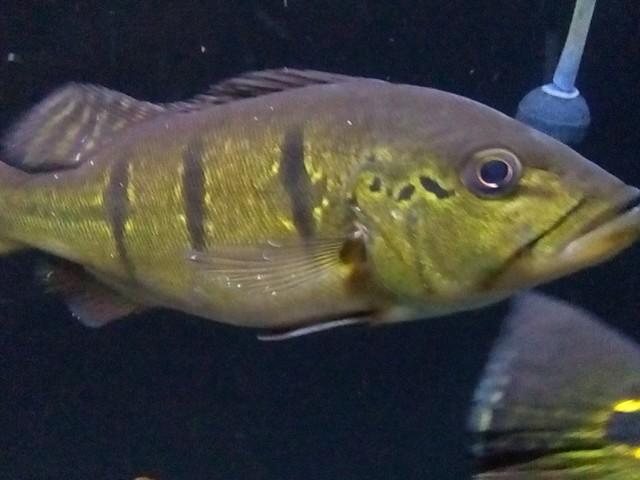 7 Tips Ampuh Hadapi Penyakit White Spot Pada Ikan Air Tawar Nakama Aquatics